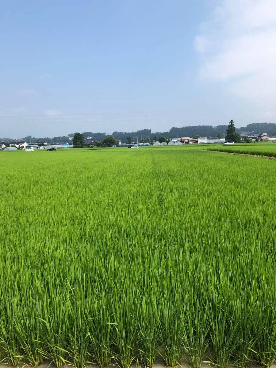 《冷めても美味しい!川下り米》12『玄米』令和2年産減農薬コシヒカリ20kg 8,000円 送料込_画像3