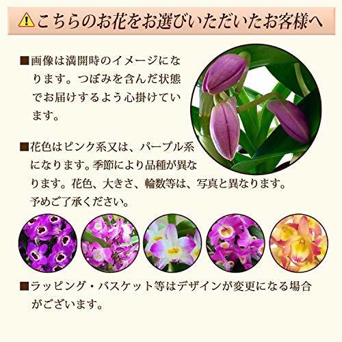 花のギフト社(Hana No Gift Sha) 4号鉢 花のギフト社 デンドロビューム 洋蘭 鉢花 鉢植え 花鉢 花 プレゼント_画像2