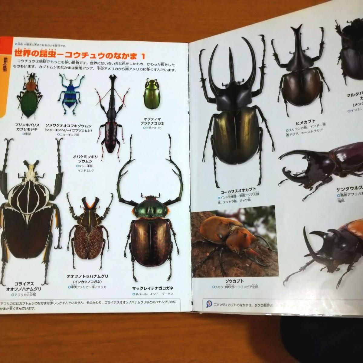 ジュニア 学研の図鑑 昆虫