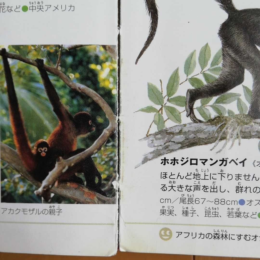 小学館の図鑑 NEO 動物