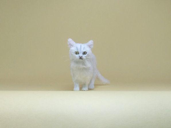 ★即決 1/12 ミニチュア ペルシャ猫 チンチラ ハンドメイド 羊毛フェルト 植毛 猫_画像2