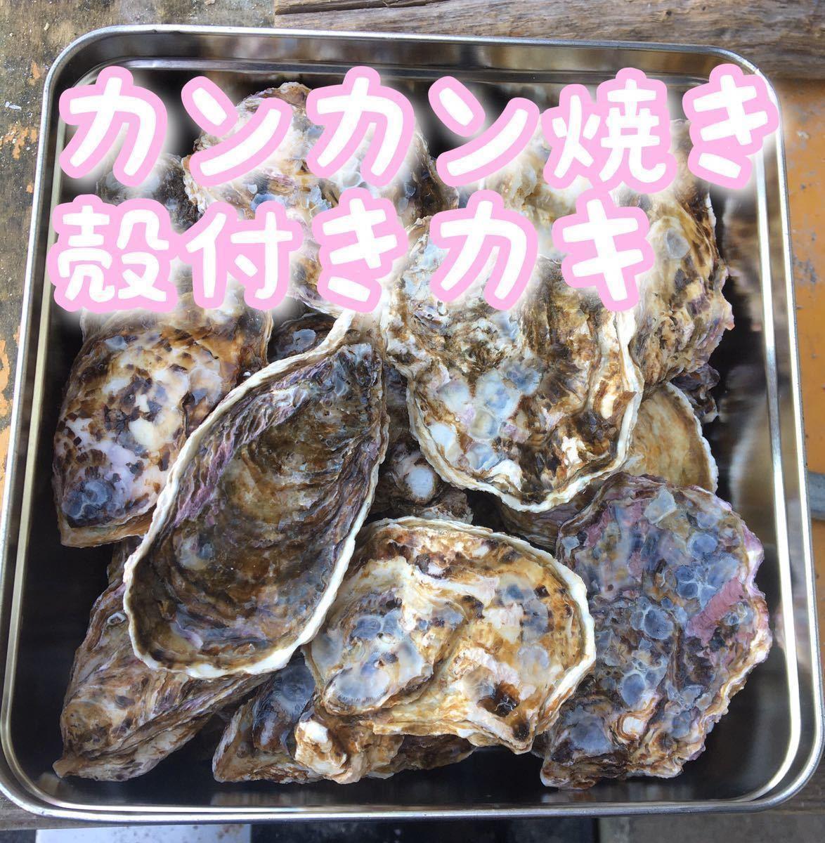 広島県産 殻付き牡蠣 38~40個 加熱用 カンカン焼き 産地直送 海のミルク 真牡蠣 送料無料 在庫一掃SALE_画像1