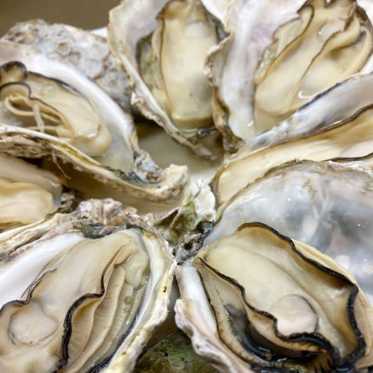 広島県産 殻付き牡蠣 38~40個 加熱用 カンカン焼き 産地直送 海のミルク 真牡蠣 送料無料 在庫一掃SALE_画像4