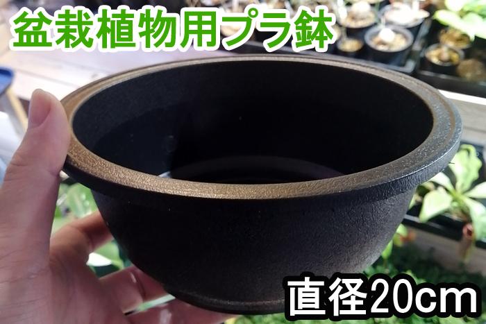 浅型 硬質 プラ鉢 1個 盆栽 塊根植物 アデニウム プラスチック 製 鉢 ポット コーデックス パキプス グラキリス_画像1