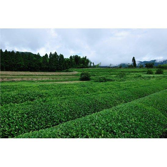甲斐製茶園 高千穂釜炒り茶ティーバッグ 緑茶4g×12包 有機JAS移行中_画像6