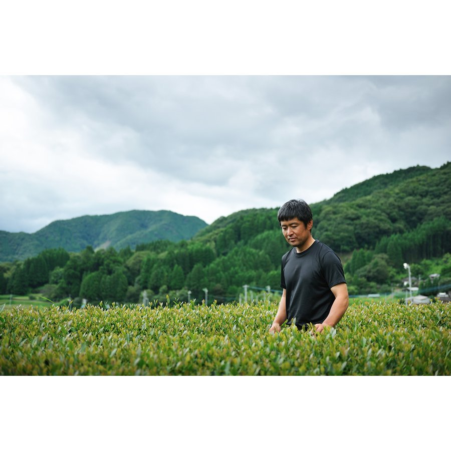 甲斐製茶園 高千穂釜炒り茶ティーバッグ 緑茶4g×12包 有機JAS移行中_画像5