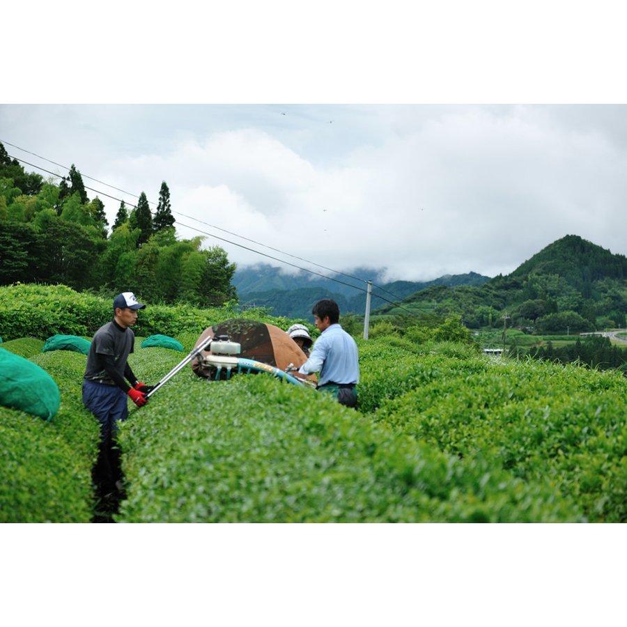 甲斐製茶園 高千穂釜炒り茶ティーバッグ 緑茶4g×12包 有機JAS移行中_画像8
