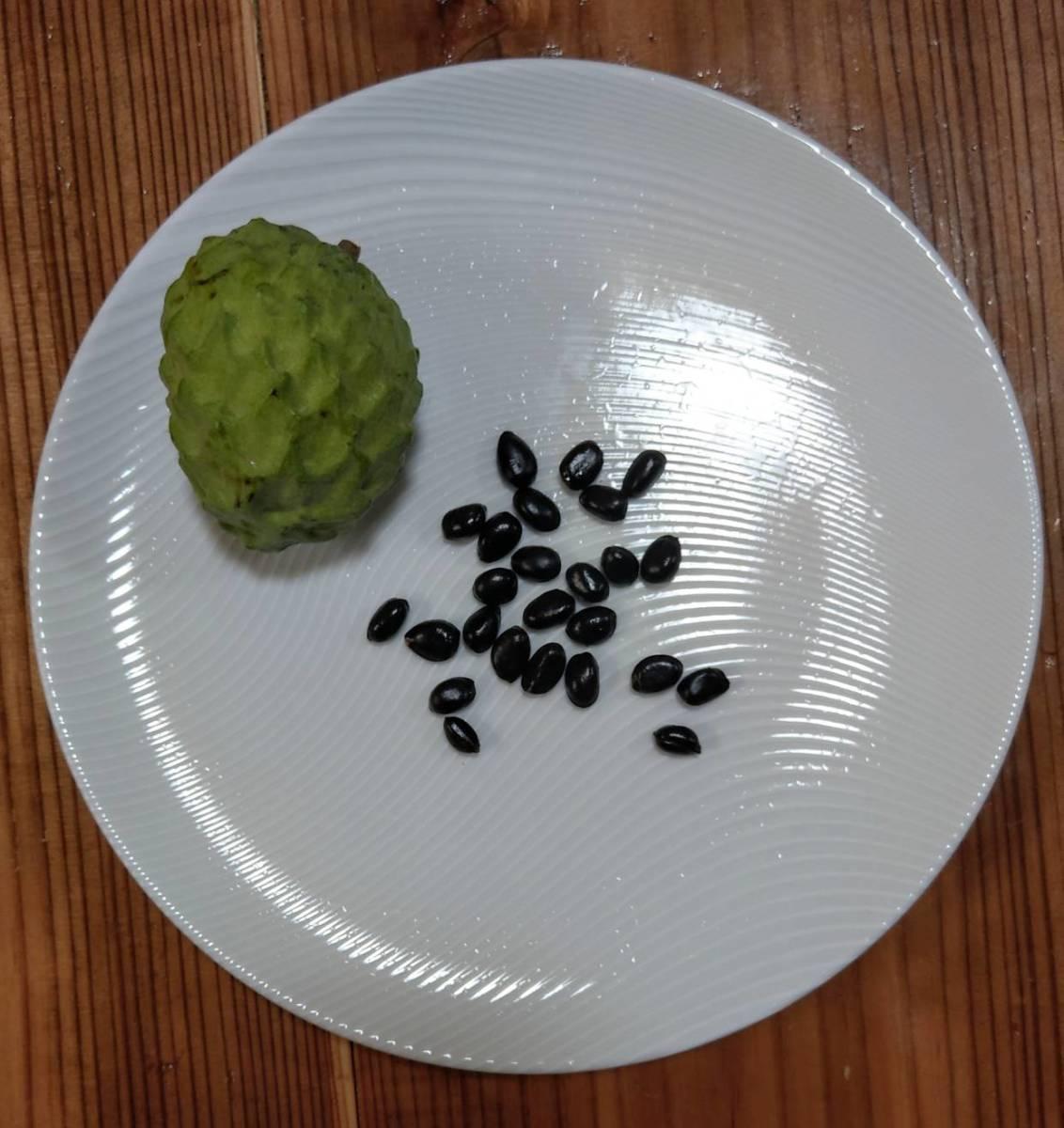 高級フルーツ、アテモヤの種子25粒
