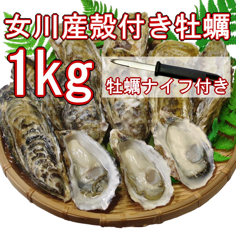 【産地直送】冷凍殻付き牡蠣 加熱用 Lサイズ 1kg(8個前後) 宮城県女川産 牡蠣ナイフ、軍手付き COL-OO1_21_画像1