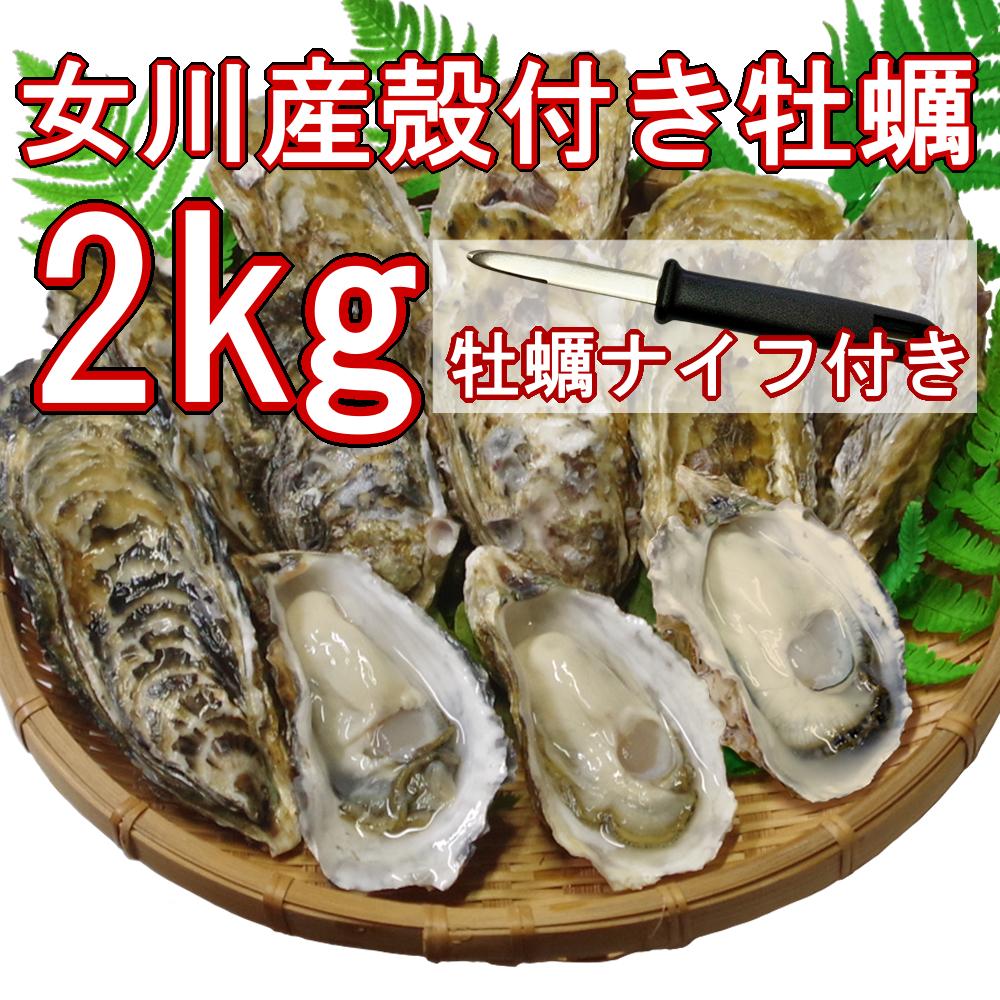 【産地直送】冷凍殻付き牡蠣 加熱用 Lサイズ 2kg(16個前後) 宮城県女川産 牡蠣ナイフ、軍手付き COL-OO2_31_画像1