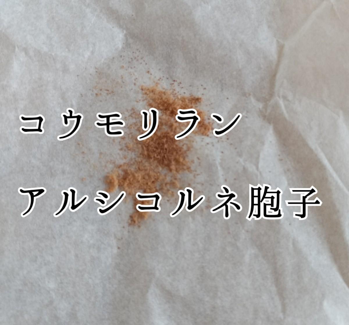【コウモリラン】プラティセリウム アルシコルネ胞子