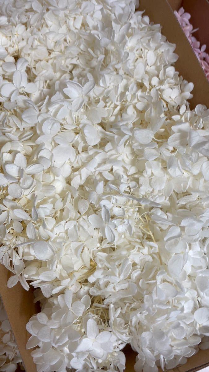 プリザーブドフラワー ハーバリウム花材 50g ハンドメイド