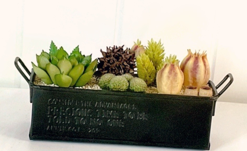 多肉植物 観葉植物
