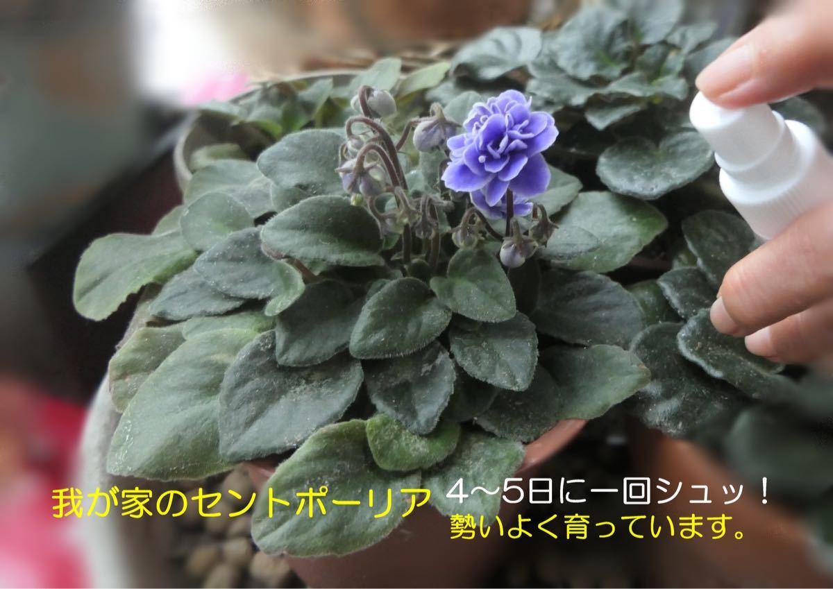 観葉植物の活性化に HB-101