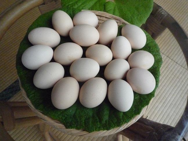 烏骨鶏(うこっけい)有精卵6個_画像4