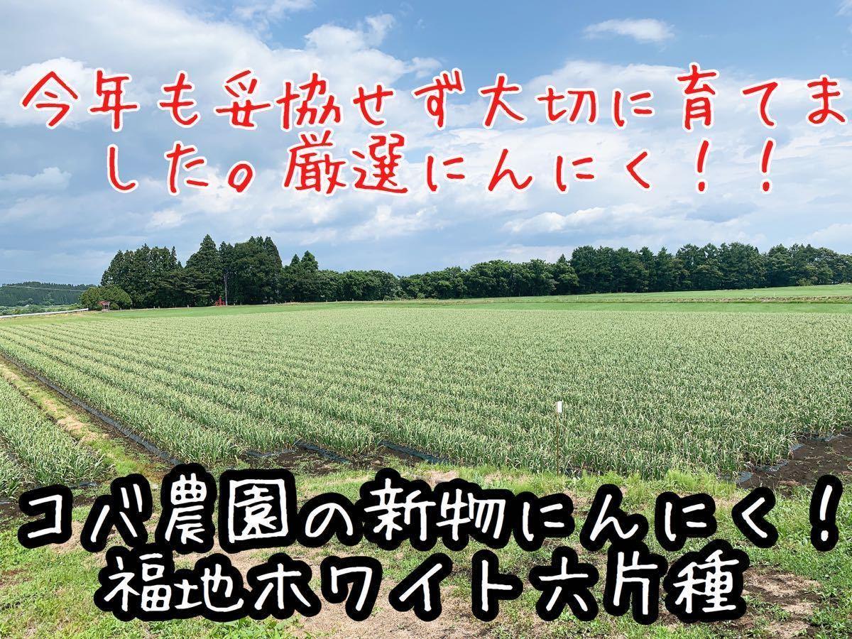 青森県産にんにく黒にんにく 令和2年産使用 福地ホワイト六片種使用 ニンニク M玉サイズ 約500g 農園直送 送料無料_画像4