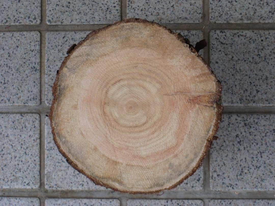 薪割り台ひのき16×15