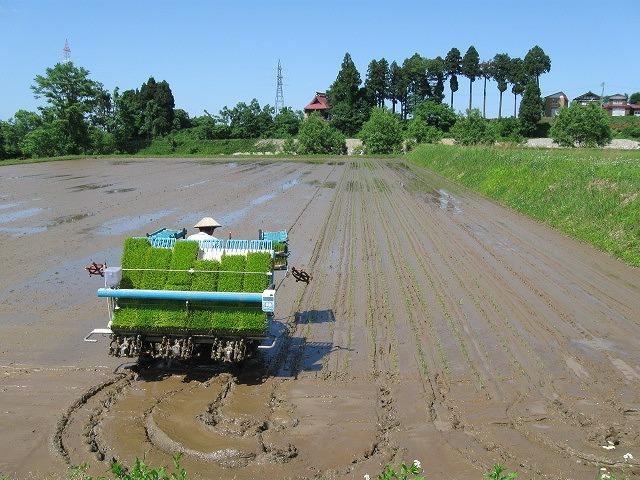 ( 令和2年収穫)<魚沼産コシヒカリ>・・(白米)10kg・・ 育苗~精米までワンチーム!!_画像2