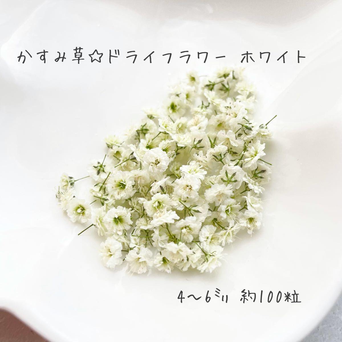 ハンドメイド☆かすみ草ドライフラワー ホワイト