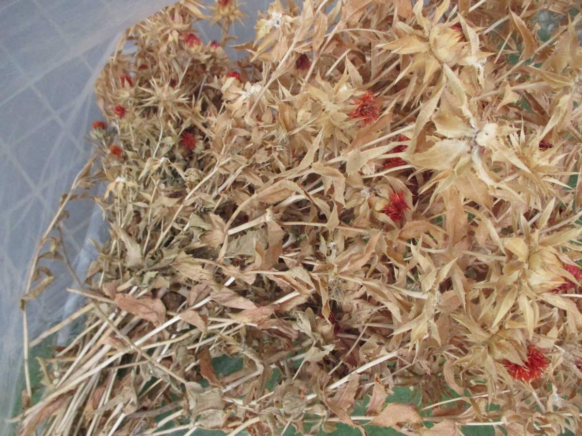 ドライフラワー スワッグ リース作り べにばな 紅花 ベニバナ 和風 紅ばな_画像1