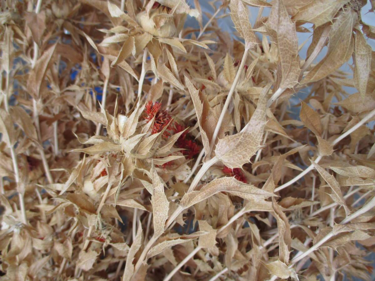 ドライフラワー スワッグ リース作り べにばな 紅花 ベニバナ 和風 紅ばな_画像5