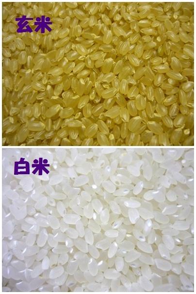 ◆Gセレクション♪つや姫♪令和2年産!山形庄内産玄米10kg(白米9kg)送料無料_画像2