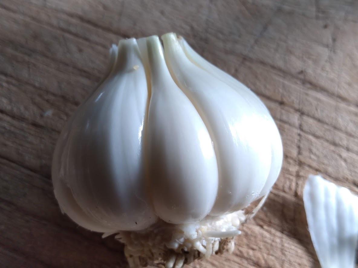 収穫仕立て!超新鮮な山口県産ニンニク 1個(1玉)生の大蒜です。_画像3
