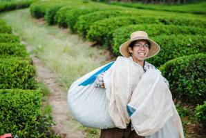 自然栽培 和紅茶(ティーバッグ)(2g15TB)X2袋☆無肥料無農薬☆奈良県産☆初夏の日差しをたっぷり浴びた茶葉を収穫し、丹念に揉込み製茶