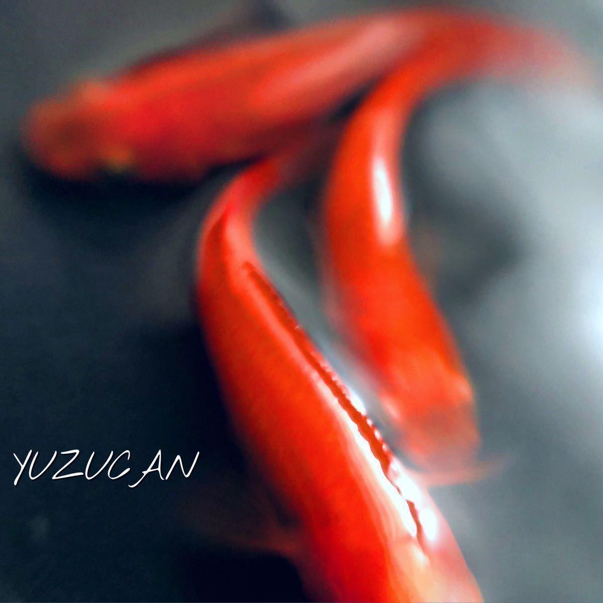 ■ゆず缶■ 「大和紅葉」の 有精卵 10個+α 腹部まで赤いハイクオリティなメダカ親種_画像1