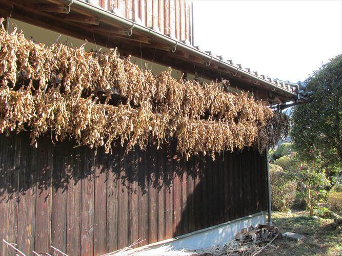 【送料無料】無農薬、有機肥料栽培 2020年兵庫県産丹波黒豆 L~3L丹波黒豆800g_画像3