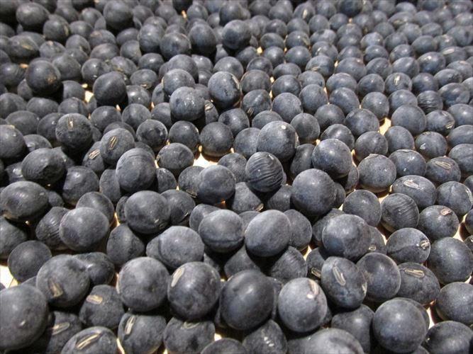 【送料無料】無農薬、有機肥料栽培 2020年兵庫県産丹波黒豆 L~3L丹波黒豆800g_画像2