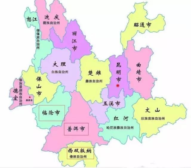 上海茶叶市場 プーアール茶 七子餅茶 生茶  昔帰(シクィ)