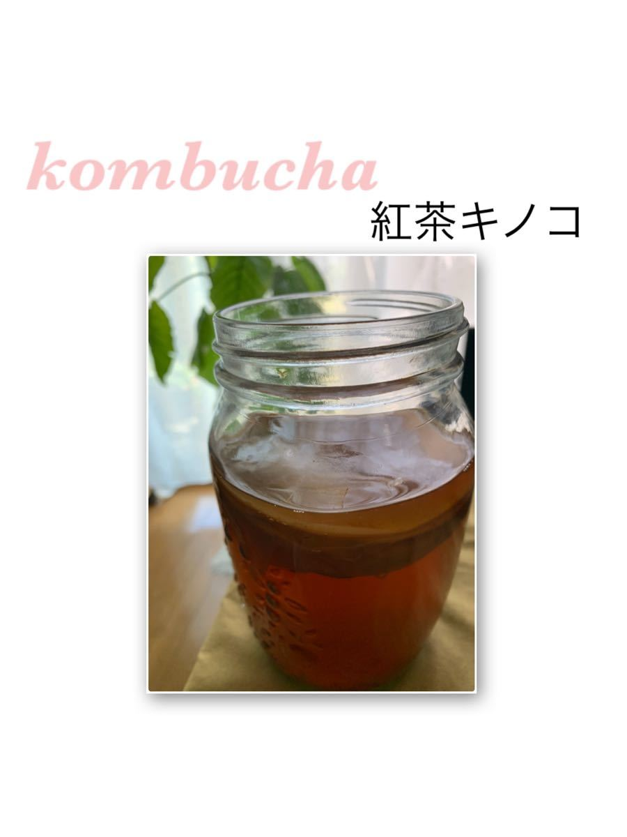 紅茶キノコ スコービー 株分け コンブチャ