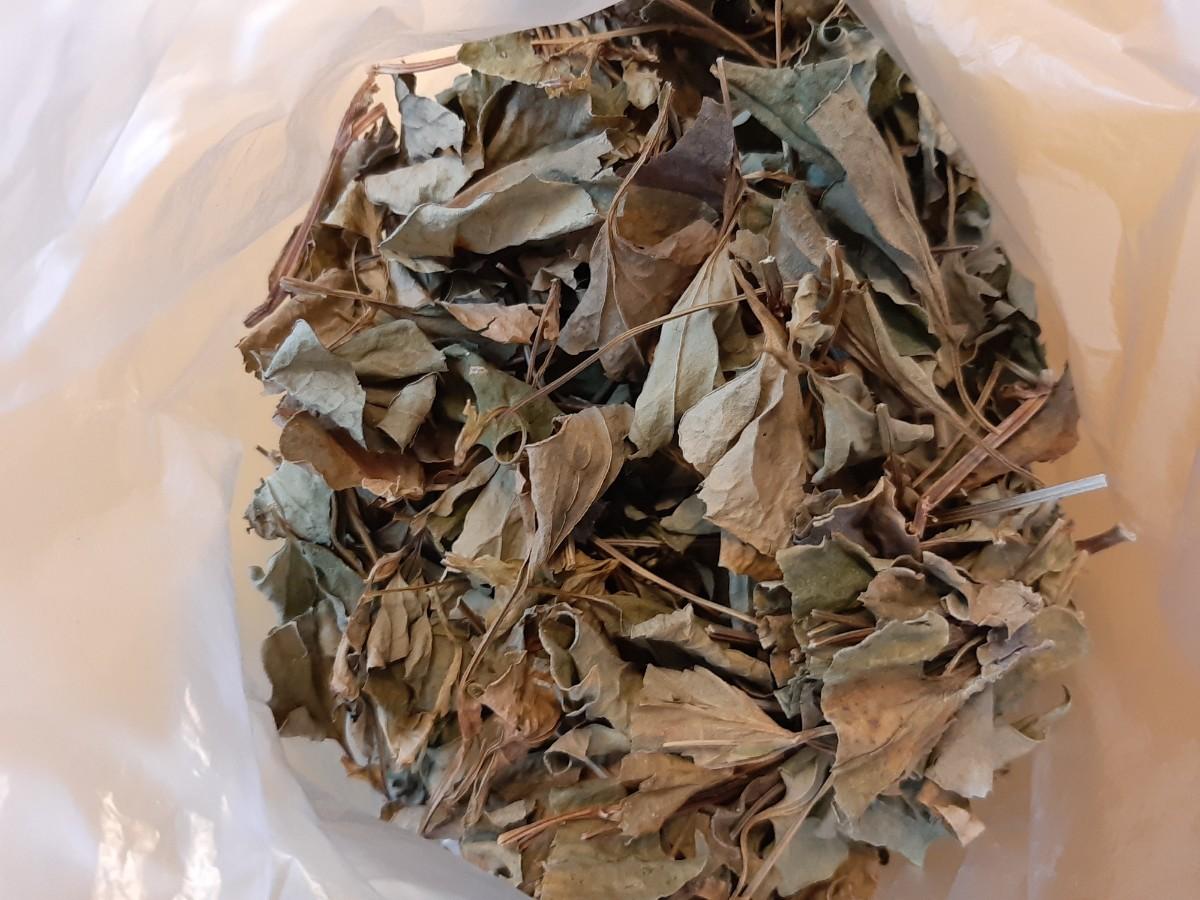 ドクダミ茶★ティーバッグ入☆乾燥ドクダミ(どくだみ) 約50g 令和2年採取無農薬