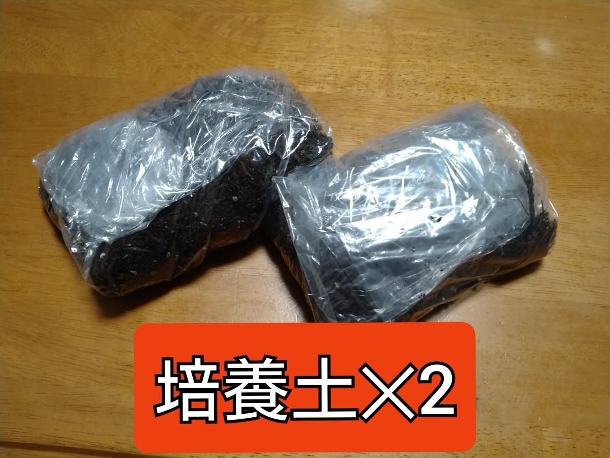 タイムワンコイン栽培キット