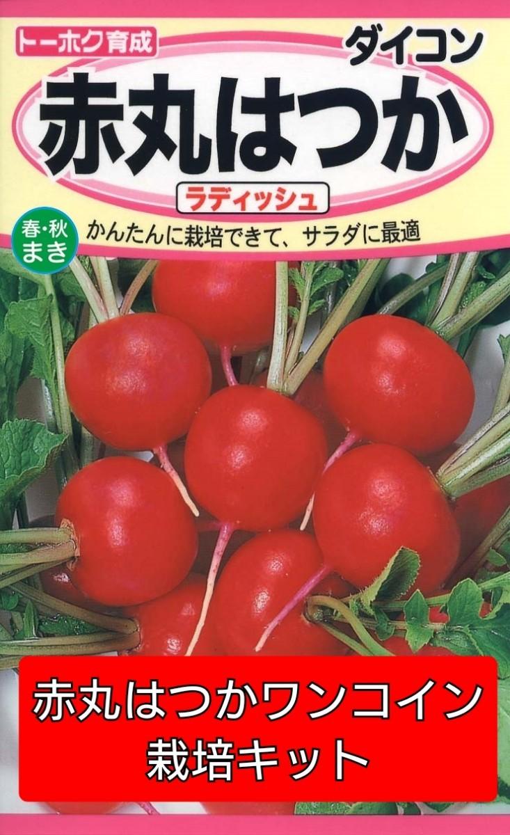 赤丸はつかワンコイン栽培キット