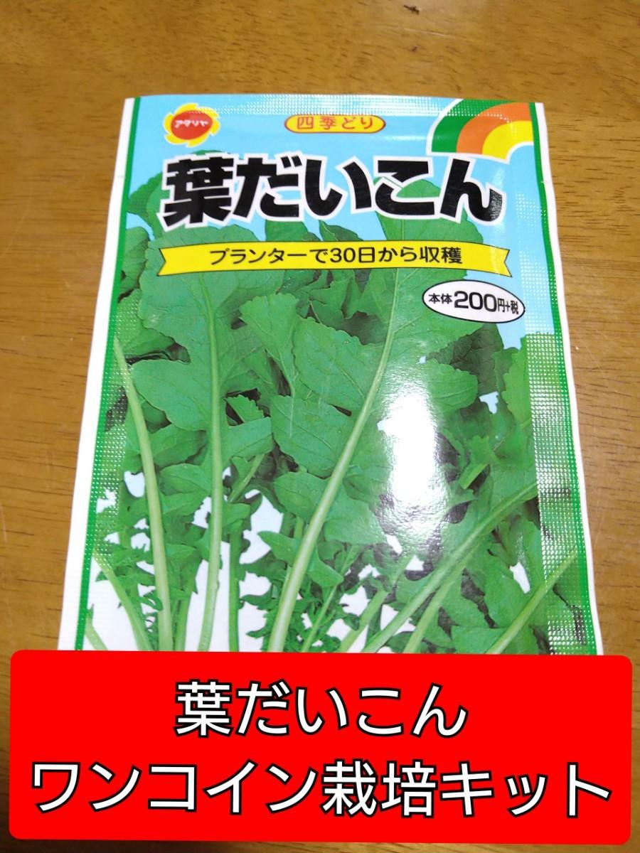 葉だいこんワンコイン栽培キット