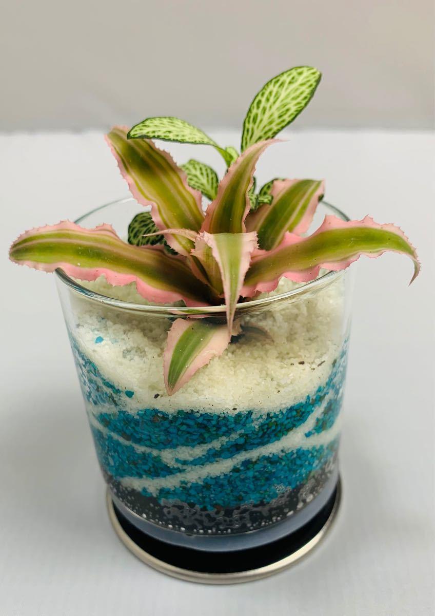 シロアミメグサ寄せ植え カラーサンドアート 観葉植物 インテリア小物