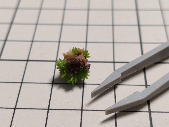 Tillandsia ionantha Godzilla crested seedlings ex. TI チランジア イオナンタ ゴジラ 綴化 実生株 自家産 _画像3