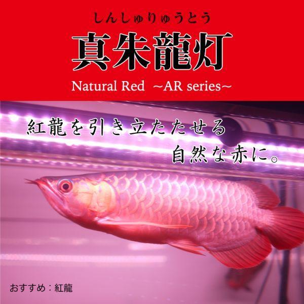 真朱龍灯 アロワナ レッド レベル1 LED 2列 大型水槽 水中照明 アロワナライト アクアリウム 熱帯魚 紅龍 200cm水槽用 でんらい AR-200EX_画像6