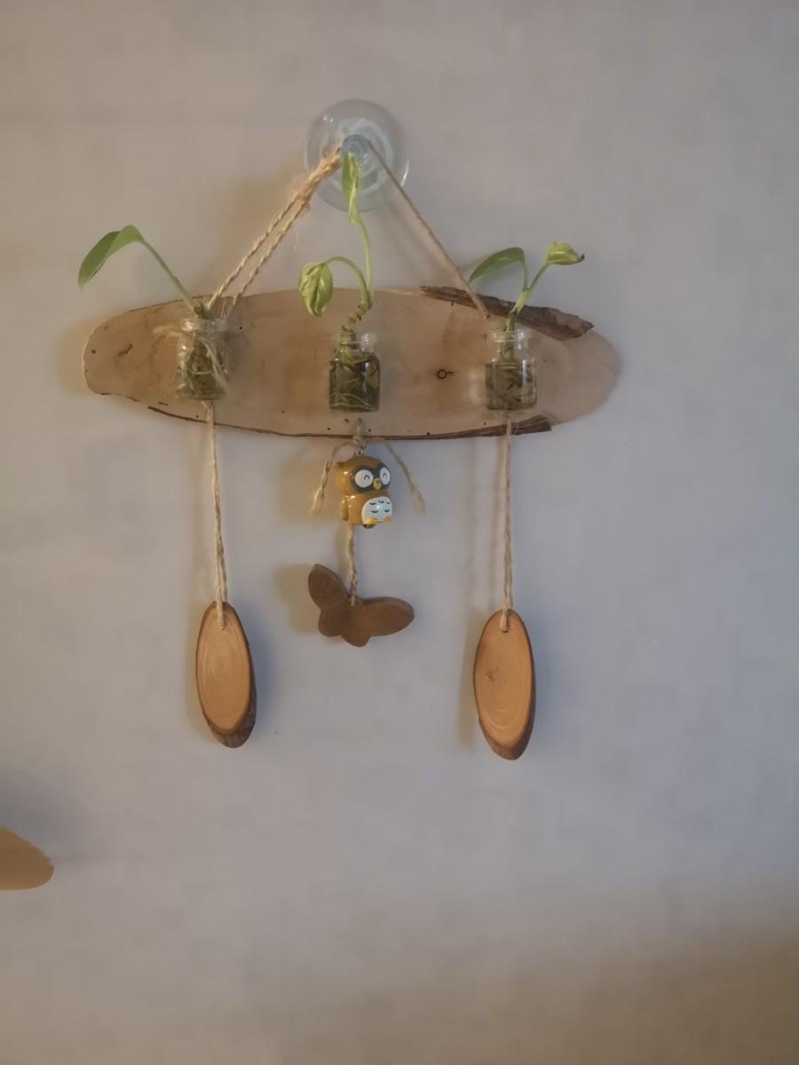 水栽培ポトスの飾り