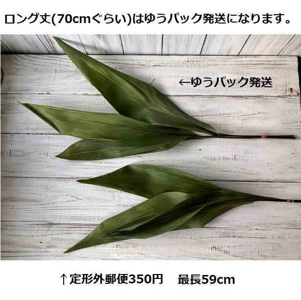 ハラン3本 50~59cm 高品質ドライフラワー花材 そのままインテリアやスワッグ 撮影小道具などに_画像5