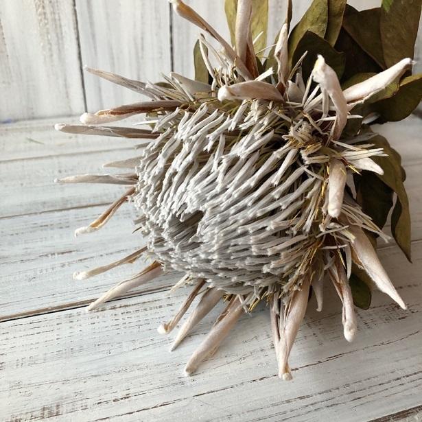 キングプロテア アークテックアイス 1本50cmドライフラワー花材 そのままインテリアやスワッグ 撮影小道具などに ワイルドフラワー_画像1