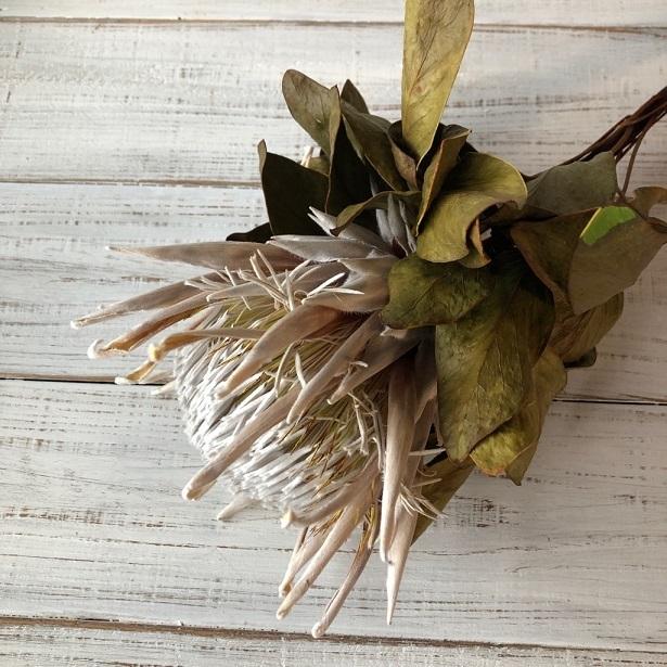 キングプロテア アークテックアイス 1本50cmドライフラワー花材 そのままインテリアやスワッグ 撮影小道具などに ワイルドフラワー_画像2