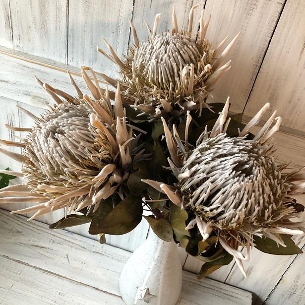 キングプロテア アークテックアイス 1本50cmドライフラワー花材 そのままインテリアやスワッグ 撮影小道具などに ワイルドフラワー_画像5