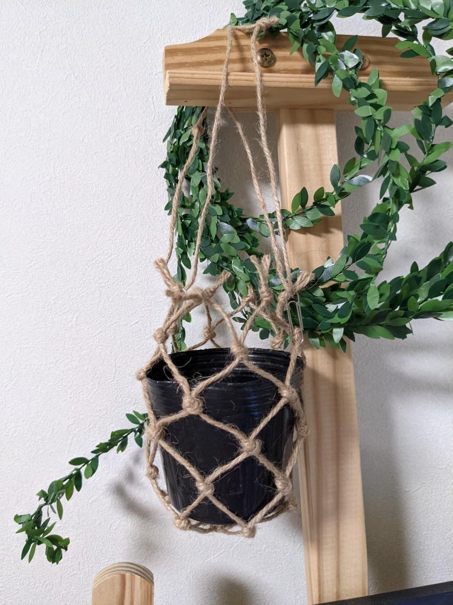 観葉植物三種 パキラ・カポック・キングバンブー
