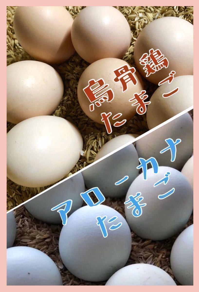 烏骨鶏 アローカナ 鶏 有精卵 平飼い卵 _画像1