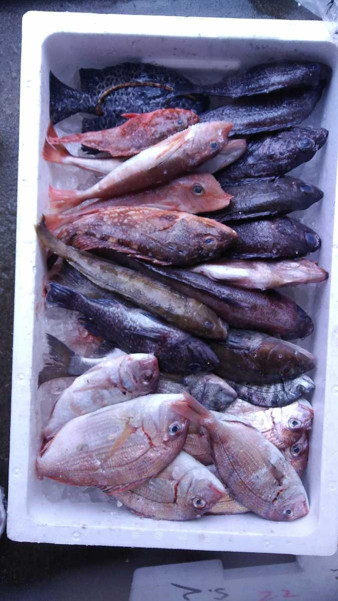 (魚)青森漁師さんのびっくり玉手箱「朝とれ魚介類」1k980円即決_画像4