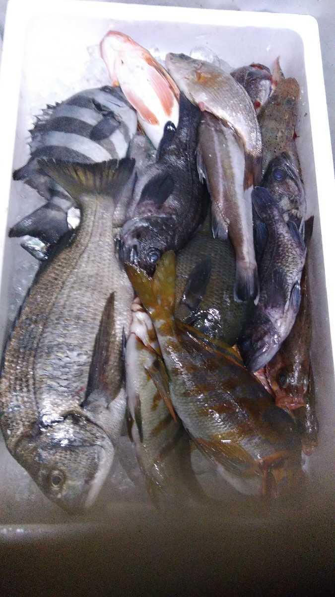 (魚)青森漁師さんのびっくり玉手箱「朝とれ魚介類」1k980円即決_画像1