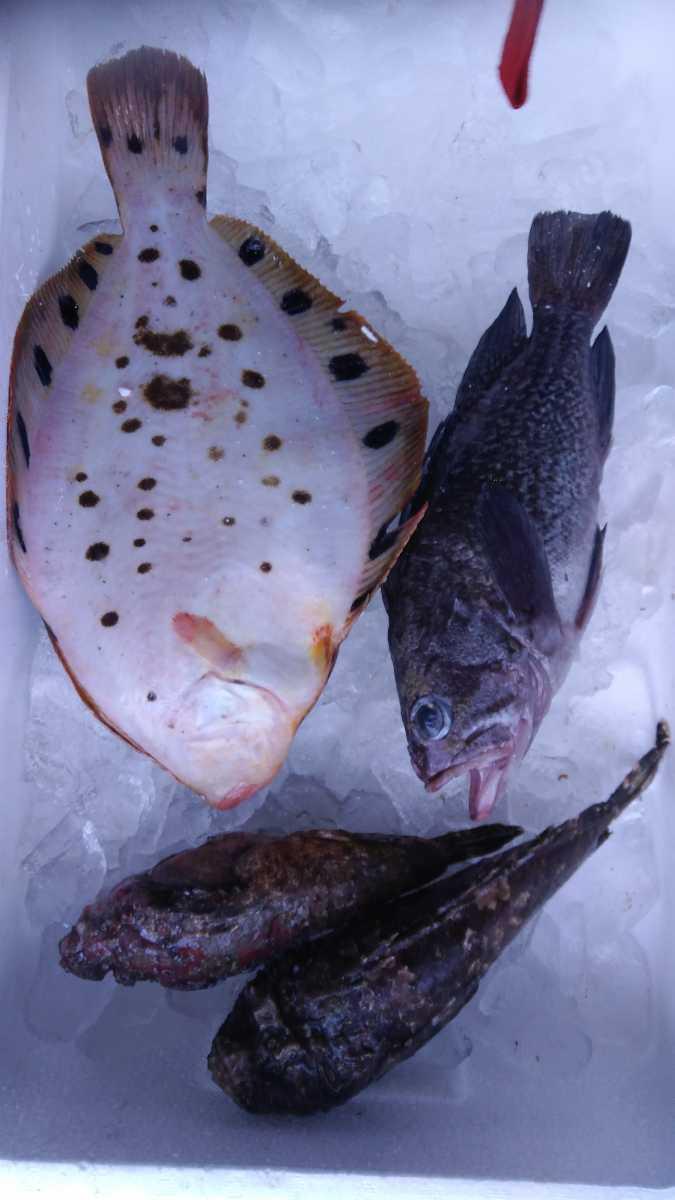 (魚)青森漁師さんのびっくり玉手箱「朝とれ魚介類」1k980円即決_画像3